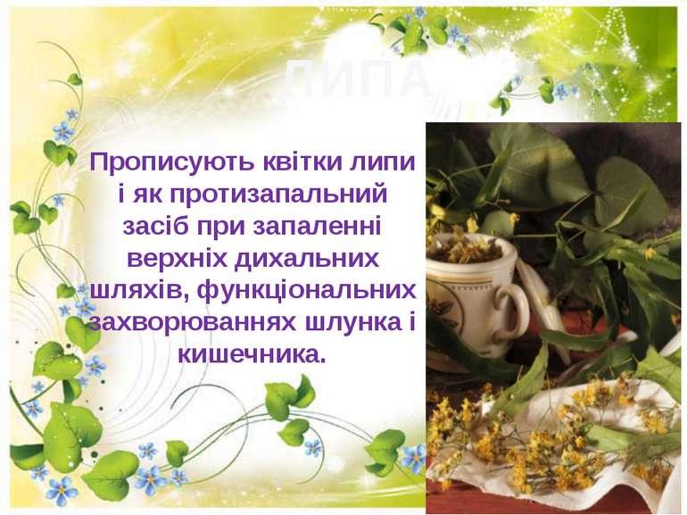 ЛИПА Прописують квітки липи i як протизапальний засiб при запаленнi вepxнix д...