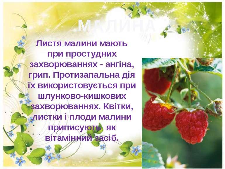 МАЛИНА Листя малини мають при простудних захворюваннях - ангіна, грип. Протиз...