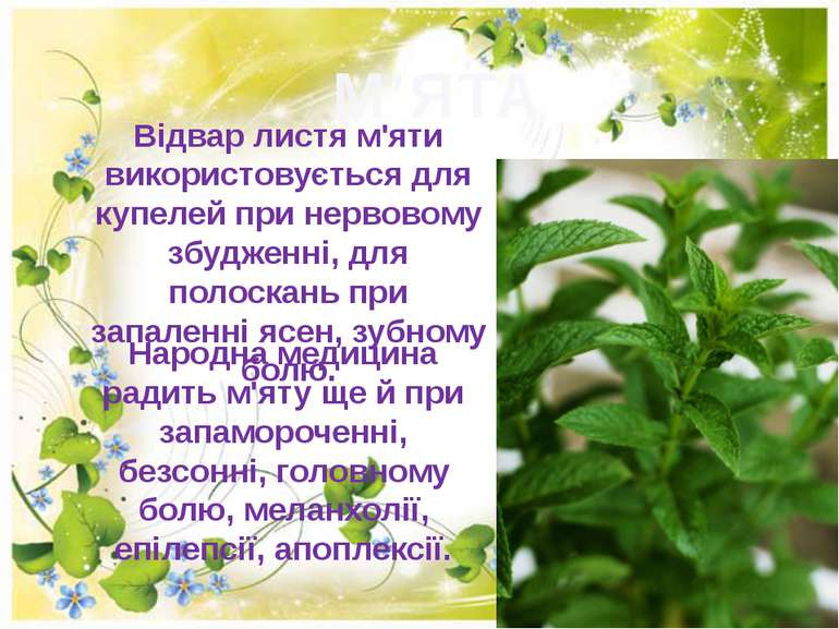 М'ЯТА Вiдвар листя м'яти використовується для купелей при нервовому збудженнi...