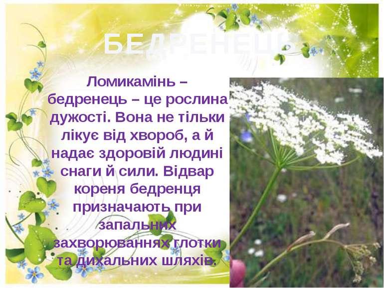 БЕДРЕНЕЦЬ Ломикамінь – бедренець – це рослина дужості. Вона не тільки лікує в...