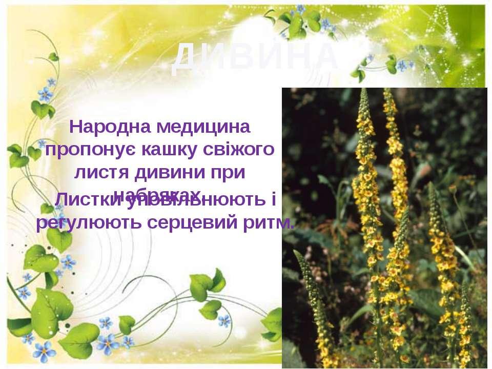 ДИВИНА Народна медицина пропонує кашку свiжого листя дивини при набряках. Лис...