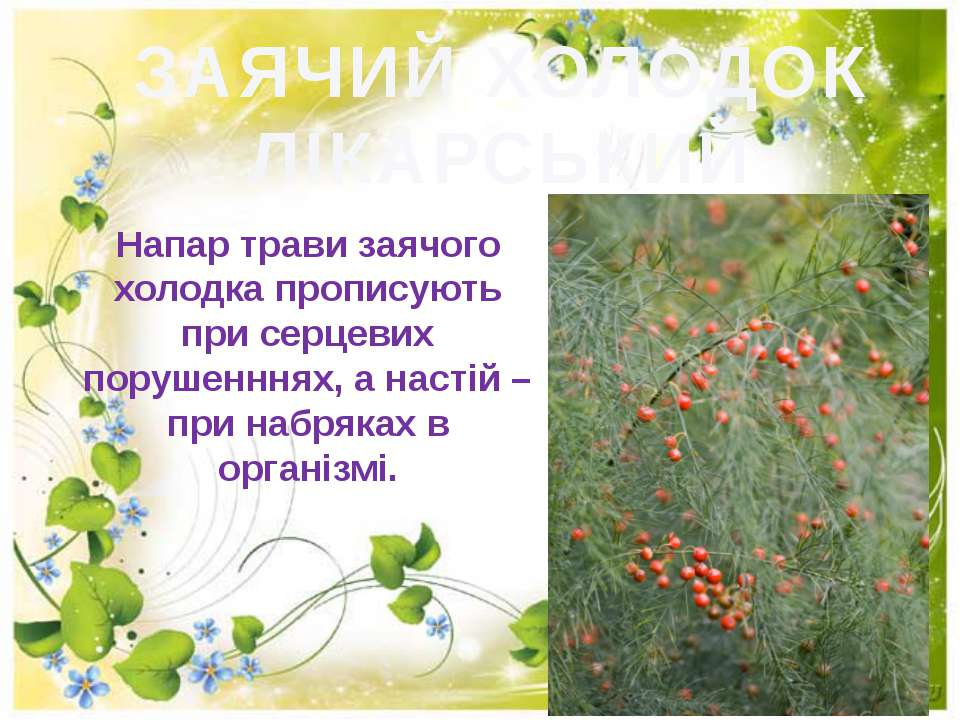 ЗАЯЧИЙ ХОЛОДОК ЛІКАРСЬКИЙ Напар трави заячого холодка прописують при серцевих...