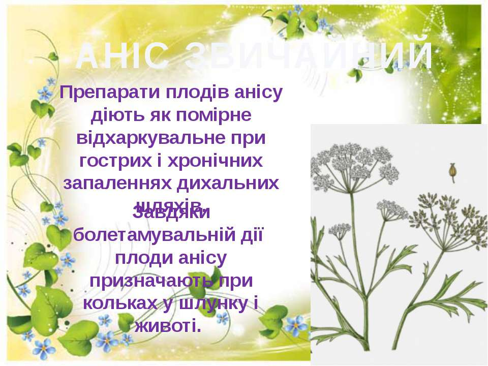 АНІС ЗВИЧАЙНИЙ Препарати плодів анісу дiють як помiрне вiдхаркувальне при гос...