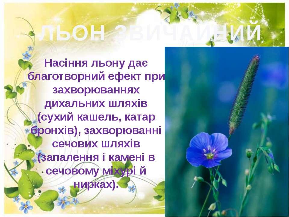 ЛЬОН ЗВИЧАЙНИЙ Насіння льону дає благотворний ефект при захворюваннях дихальн...