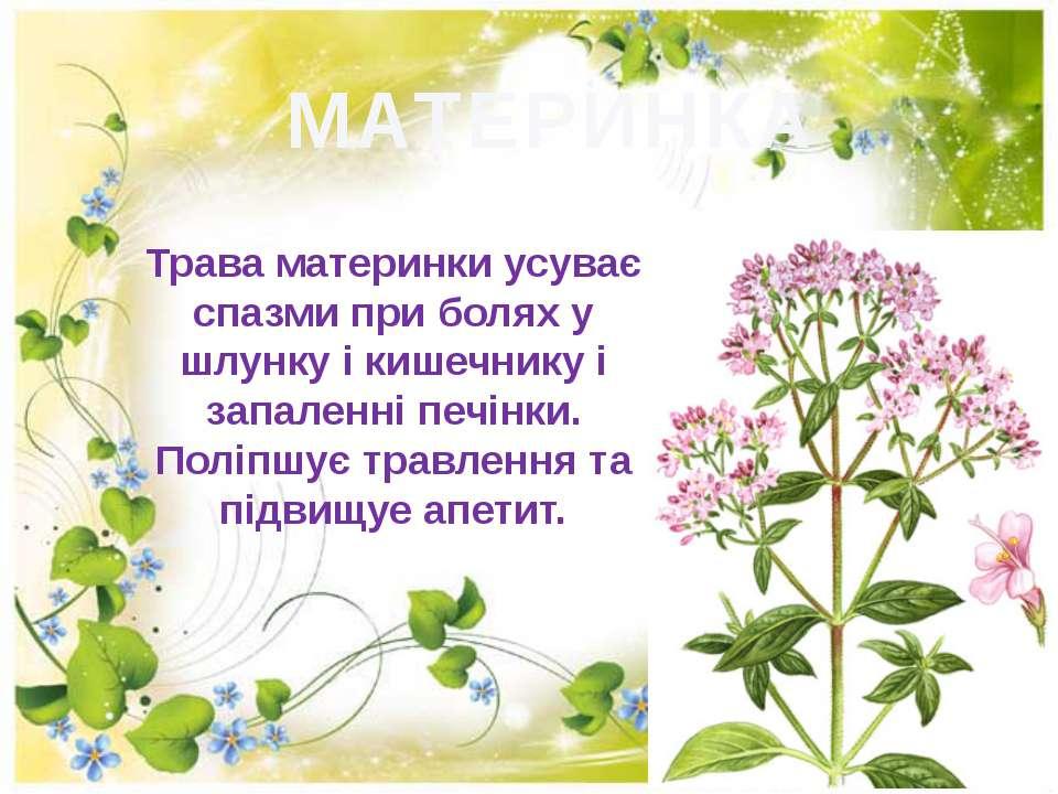 МАТЕРИНКА Трава материнки усуває спазми при болях у шлунку i кишечнику i запа...