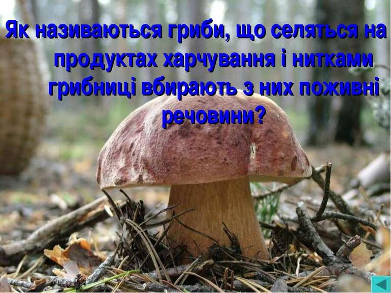 Як називаються гриби, що селяться на продуктах харчування і нитками грибниці ...