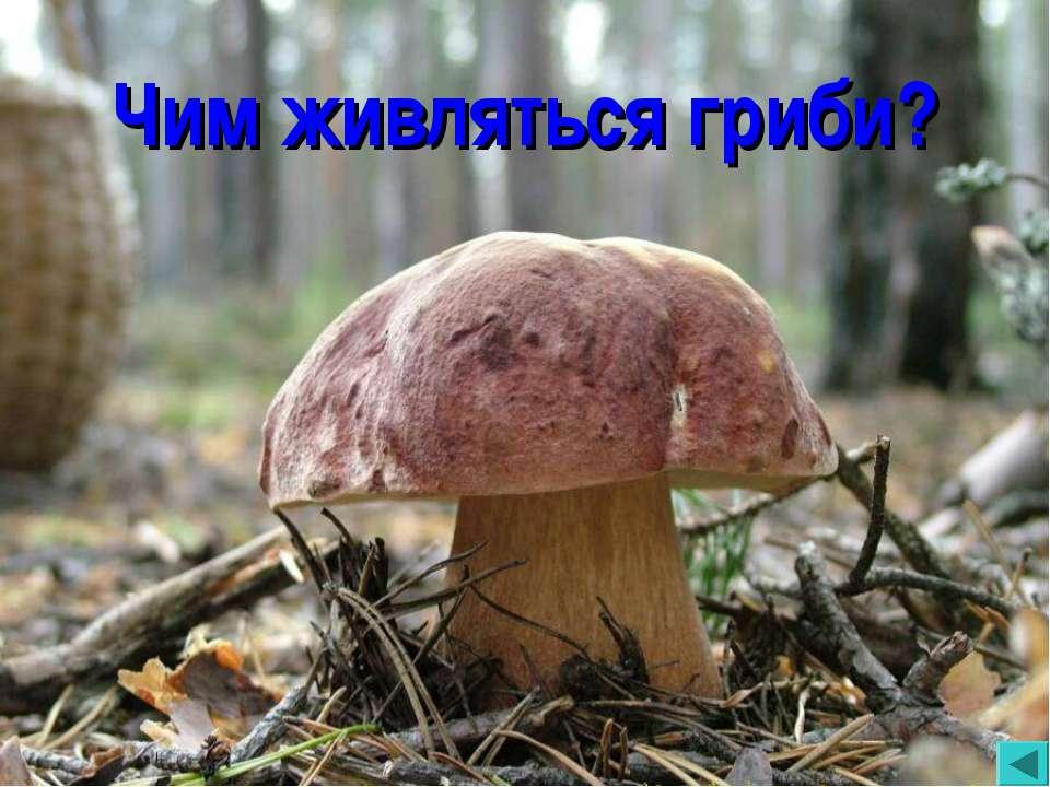 Чим живляться гриби?