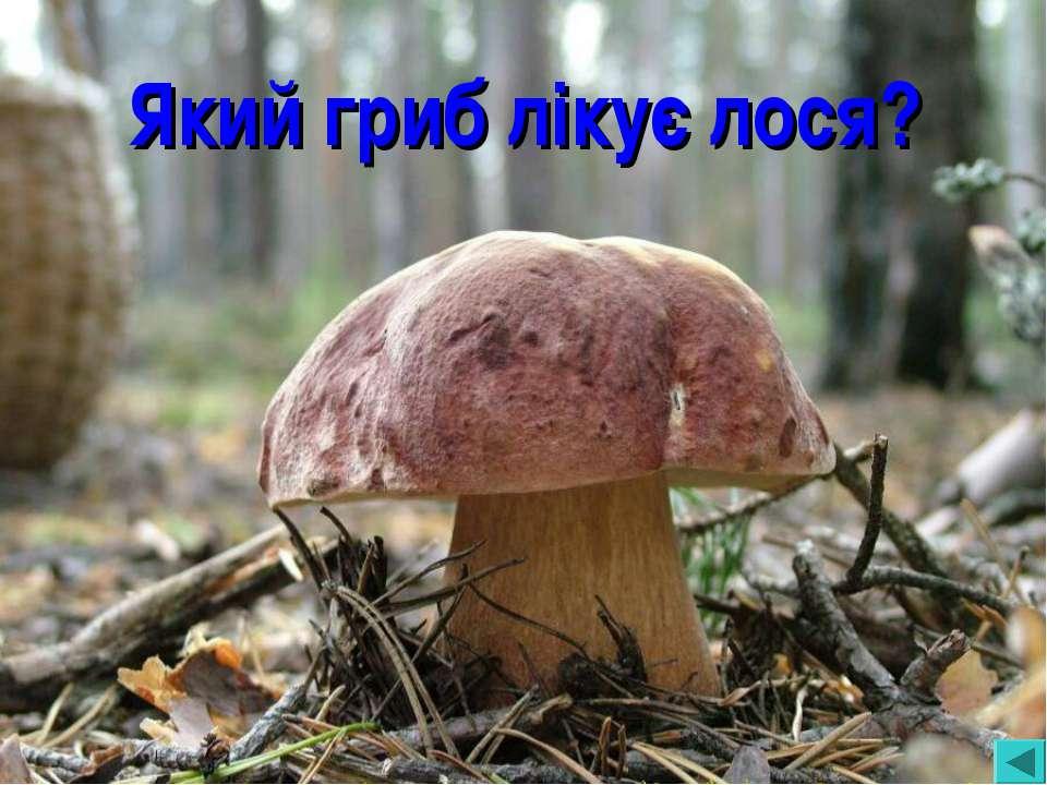Який гриб лікує лося?