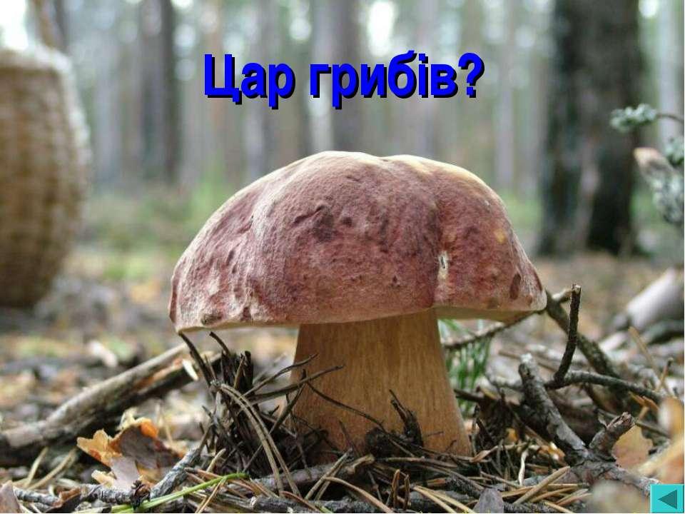 Цар грибів?
