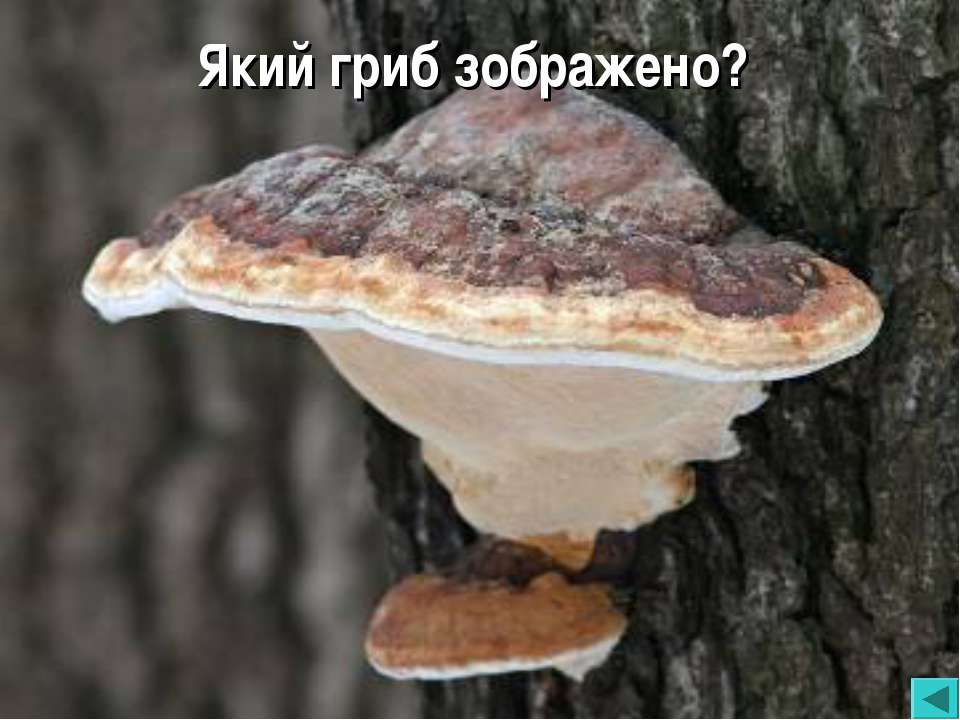 Який гриб зображено?