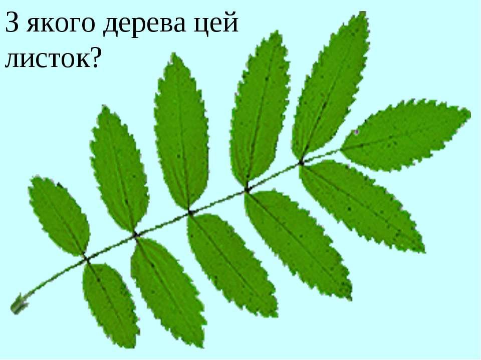 З якого дерева цей листок?