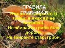 Ніколи не збирайте ті гриби, в яких ви не впевнені. Не збирайте гриби біля до...