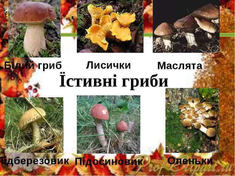 Підберезовик Підосиковик Опеньки Білий гриб Їстивні гриби Лисички Маслята Під...