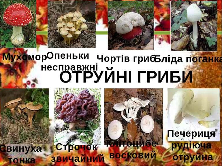 ОТРУЙНІ ГРИБИ Мухомор Опеньки несправжні Чортів гриб Бліда поганка Свинуха то...