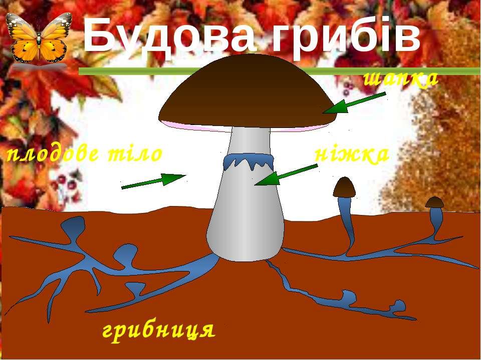 шапка грибниця плодове тіло ніжка Будова грибів