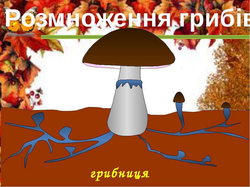 грибниця Розмноження грибів