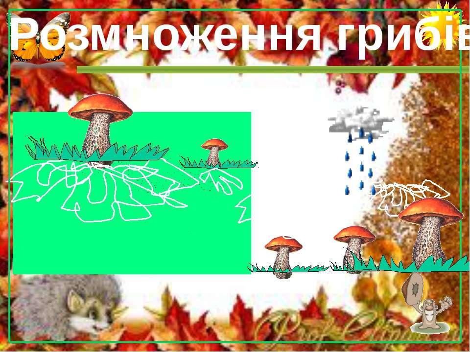 Розмноження грибів