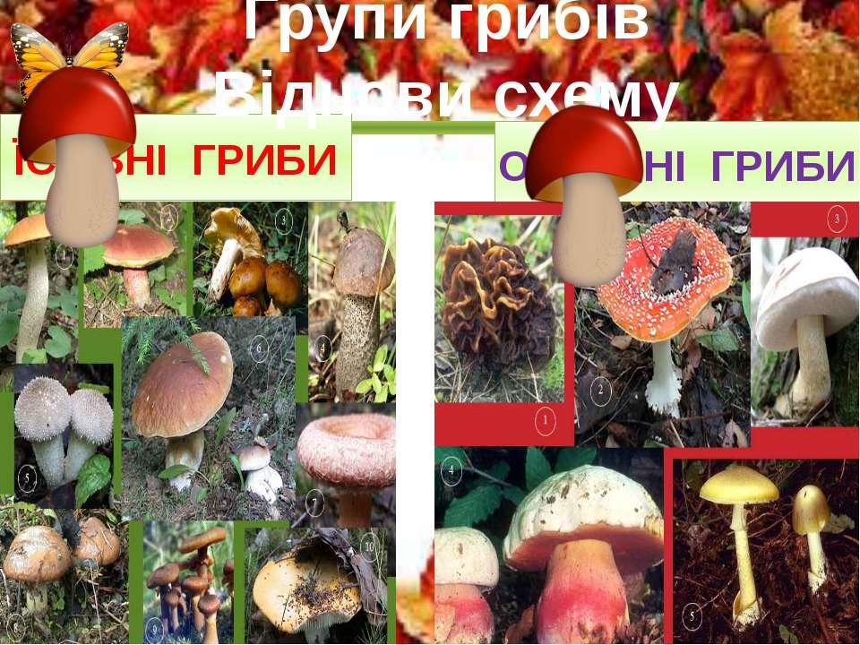 ЇСТІВНІ ГРИБИ ОТРУЙНІ ГРИБИ Групи грибів Віднови схему