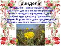 Ґринделія ҐРИНДЕЛІЯ – квітка чаруюча, мила. Ворона аж дзьоба від щастя розкри...