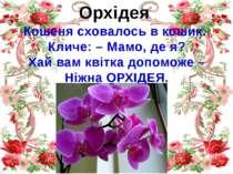 Орхідея Кошеня сховалось в кошик. Кличе: – Мамо, де я? Хай вам квітка допомож...