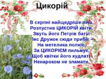 Цикорій В серпні найщедріше літо. Розпустив ЦИКОРІЙ квіти. Звуть його Петрів ...