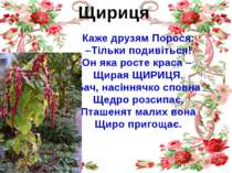 Щириця Каже друзям Порося: –Тільки подивіться! Он яка росте краса – Щирая ЩИР...