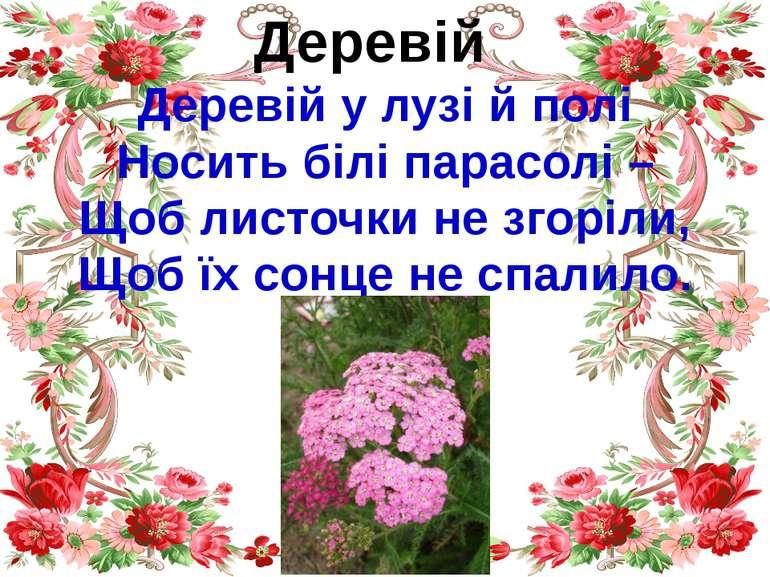 Деревій Деревій у лузі й полі Носить білі парасолі – Щоб листочки не згоріли,...
