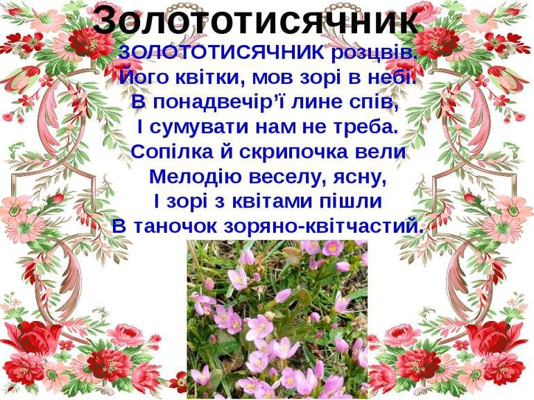 Золототисячник ЗОЛОТОТИСЯЧНИК розцвів. Його квітки, мов зорі в небі. В понадв...