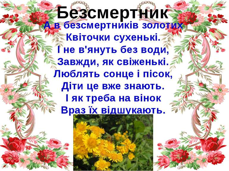 Безсмертник А в безсмертників золотих Квіточки сухенькі. І не в'януть без вод...