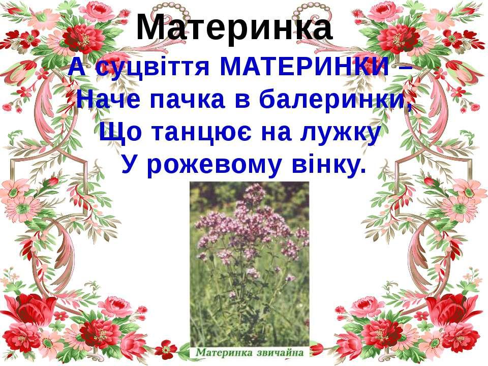 Материнка А суцвіття МАТЕРИНКИ – Наче пачка в балеринки, Що танцює на лужку У...