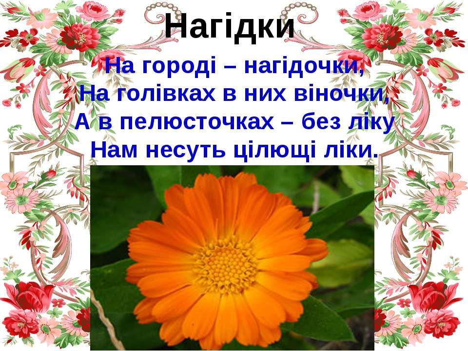 Нагідки На городі – нагідочки, На голівках в них віночки, А в пелюсточках – б...