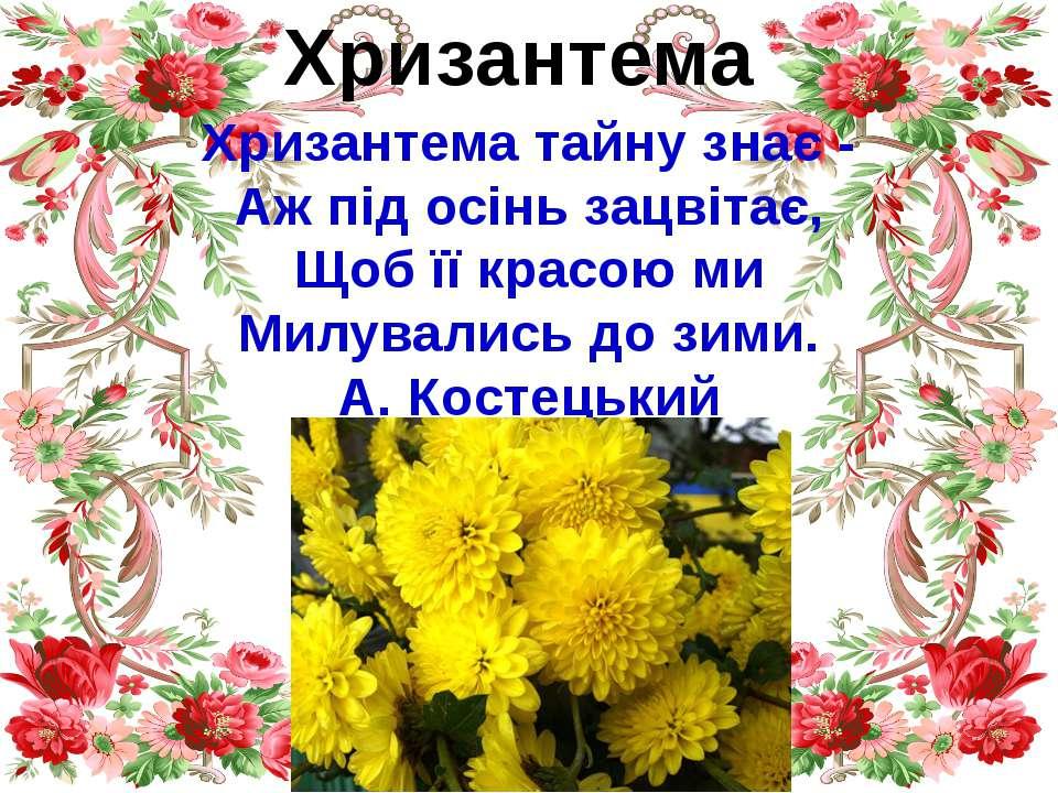 Хризантема Хризантема тайну знає - Аж під осінь зацвітає, Щоб її красою ми Ми...