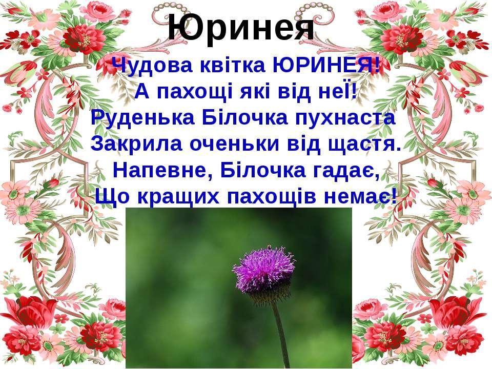 Юринея Чудова квітка ЮРИНЕЯ! А пахощі які від неЇ! Руденька Білочка пухнаста ...