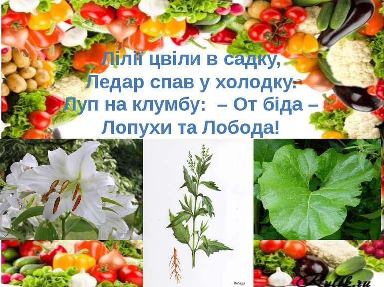 Лілії цвіли в садку, Ледар спав у холодку. Луп на клумбу: – От біда – Лопухи ...