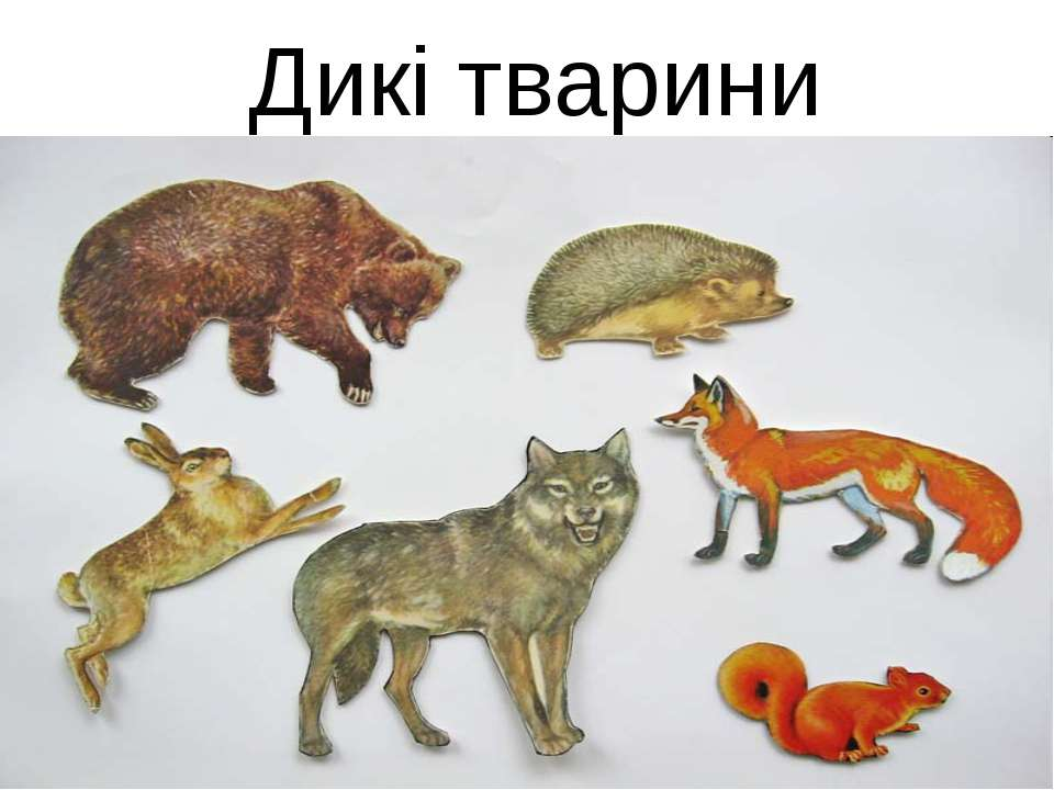 Дикі тварини