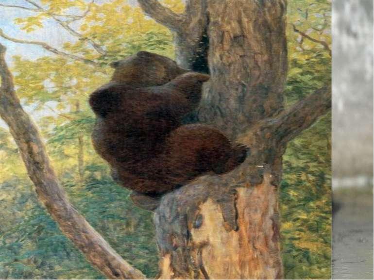 Що їсть ведмідь? Він їсть комах та їх личинки, черв'яків, жаб, ящірок, рибу, ...