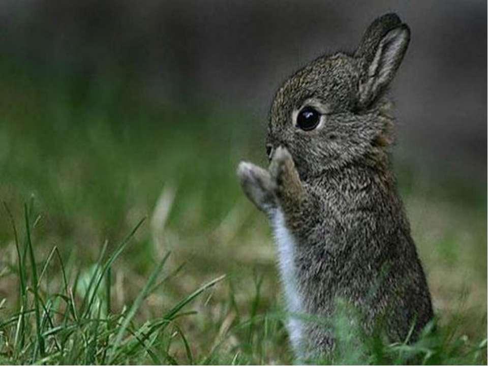 Малих тварин відганяє, а увагу великих відвертає на себе. Будь-яка зайчиха, з...