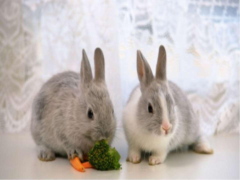 Чим живиться заєць? Він їсть кору і гілки дерев та кущів, насіння буряків, тр...