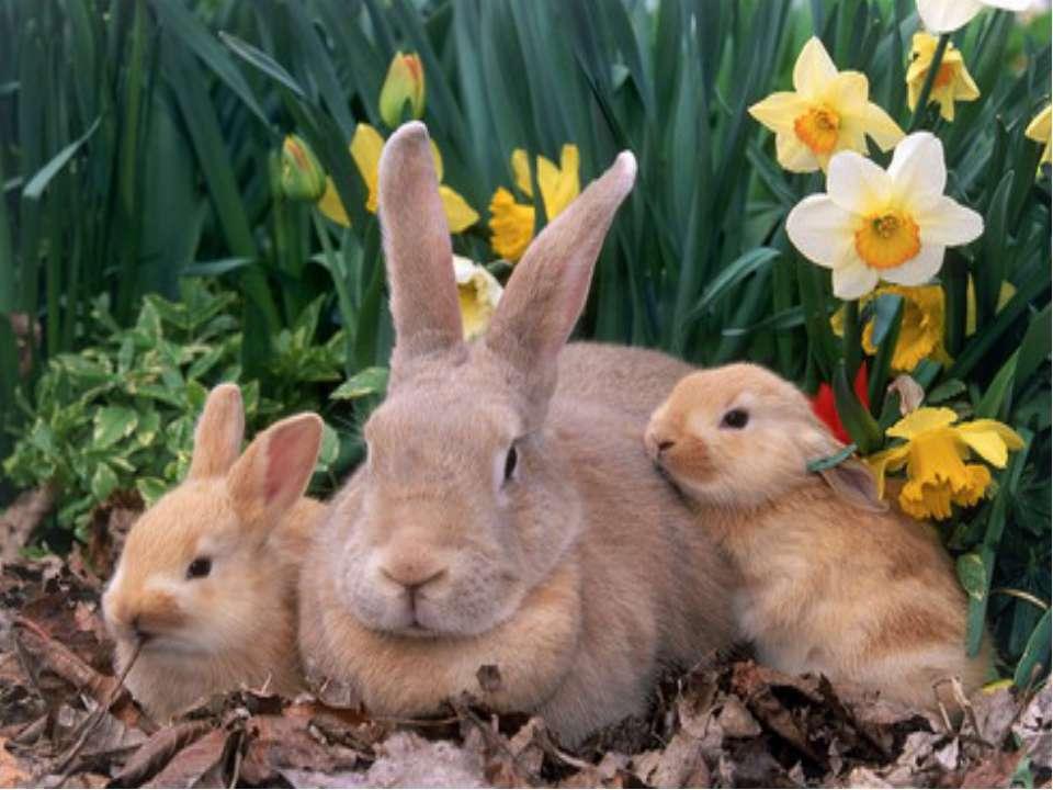 Маючи стільки ворогів, зайці вже б давно всі зникли. Але вони продовжують існ...