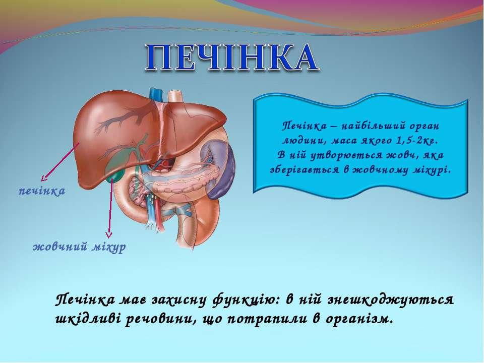 Печінка має захисну функцію: в ній знешкоджуються шкідливі речовини, що потра...