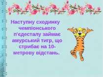 Наступну сходинку чемпіонського п'єдесталу займає амурський тигр, що стрибає ...