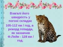 Взагалі його швидкість у погоні складає 105-112 км / год, а рекорд гепарда, я...