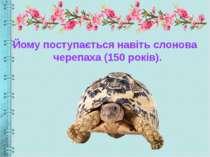 Йому поступається навіть слонова черепаха (150 років).