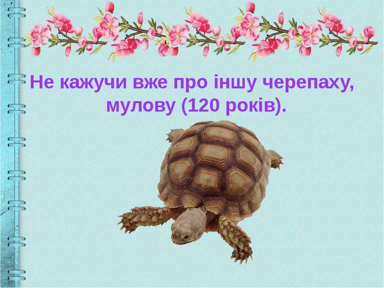 Не кажучи вже про іншу черепаху, мулову (120 років).