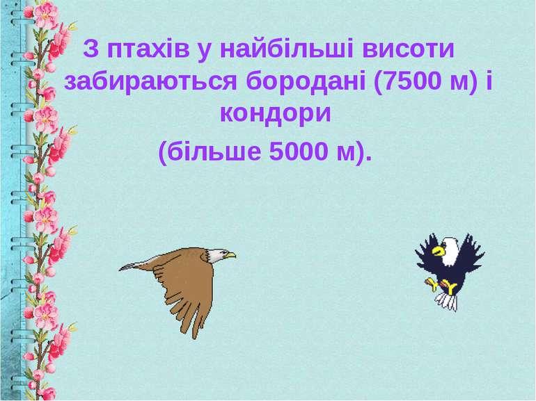 З птахів у найбільші висоти забираються бородані (7500 м) і кондори (більше 5...