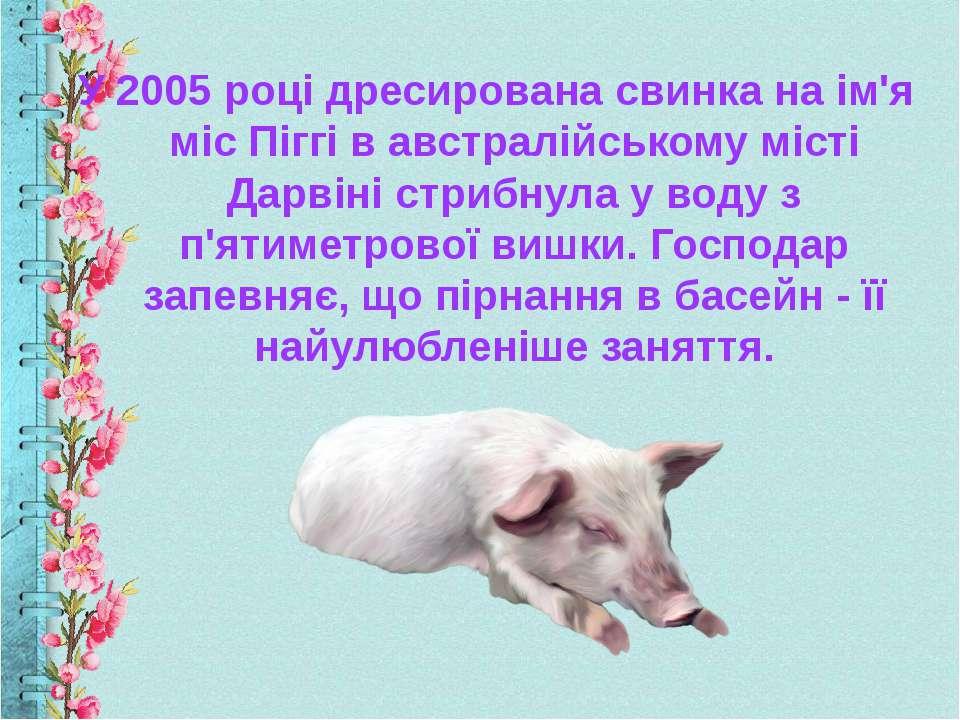 У 2005 році дресирована свинка на ім'я міс Піггі в австралійському місті Дарв...
