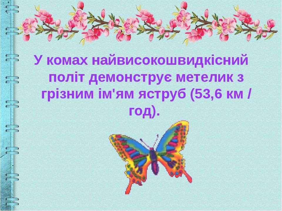 У комах найвисокошвидкісний політ демонструє метелик з грізним ім'ям яструб (...