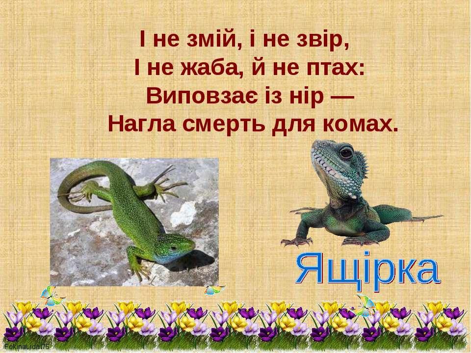 І не змій, і не звір,  І не жаба, й не птах:&nb...