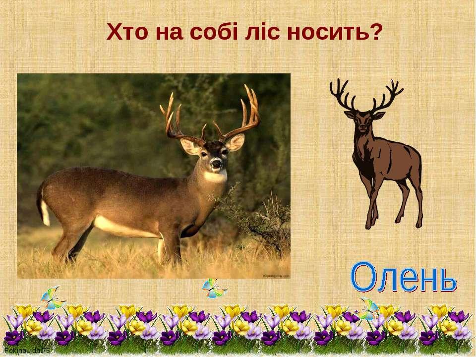 Хто на собі ліс носить?