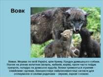 ю Вовк Хижак. Мешкає по всій Україні, крім Криму. Предок домашнього собаки. П...
